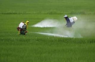pesticidagricola-320x210