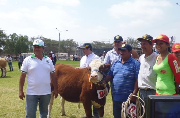 """Premiación de la vaquillona """"Kina"""" de propiedad de Simmental del Perú. En la foto su presidente Sr. Gilmer Sánchez Gonzáles (gorro blanco) y los organizadores de la XV Feria Ganadera de ASOGAN-Lambayeque. Sábado 1 de noviembre de 2014."""